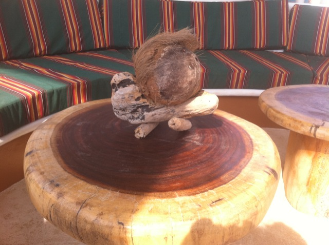 Make your Own Pet CoCoNut while you visit Rusty's Surf Villa.